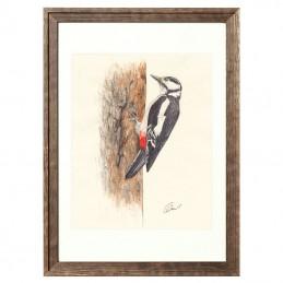 Obrazek z ptaszkiem DZIĘCIOŁ